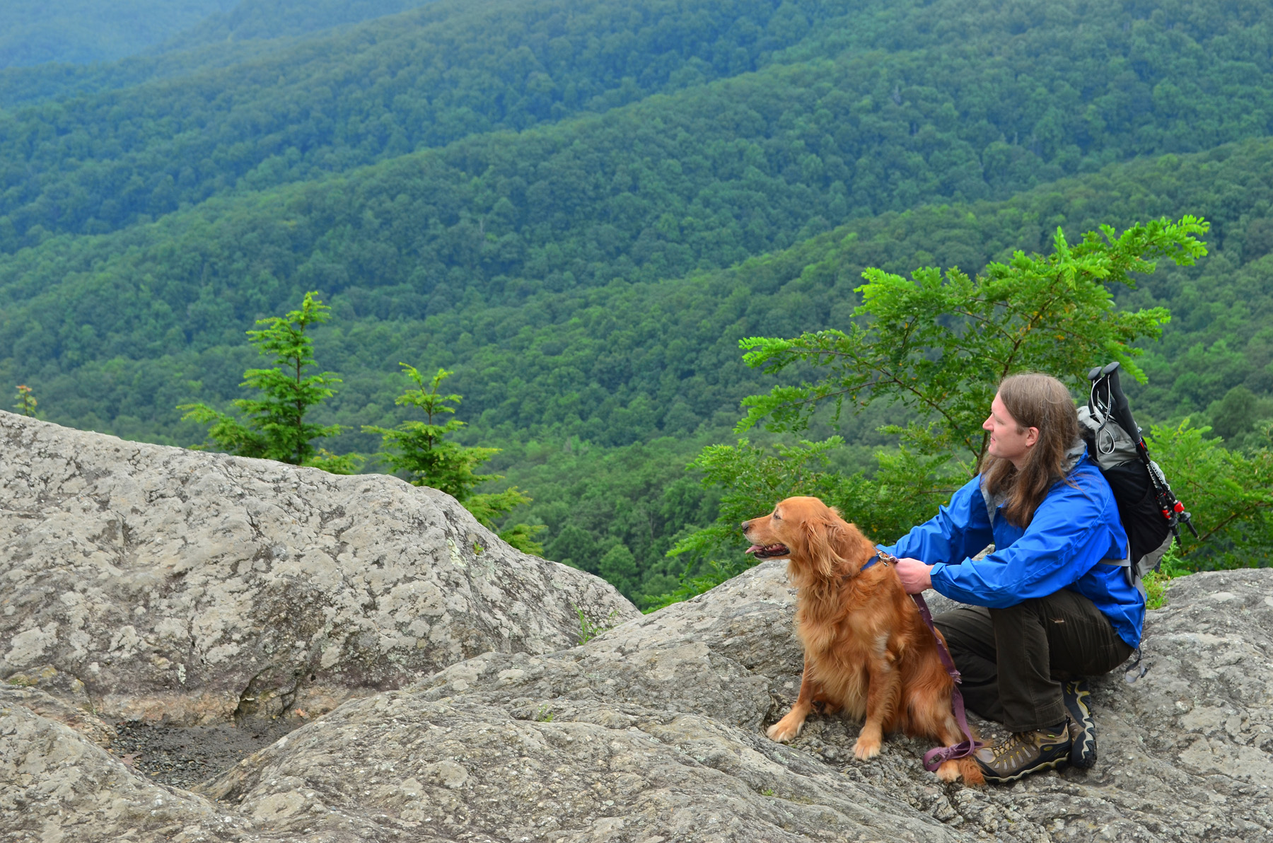 5 Dog Friendly Attractions